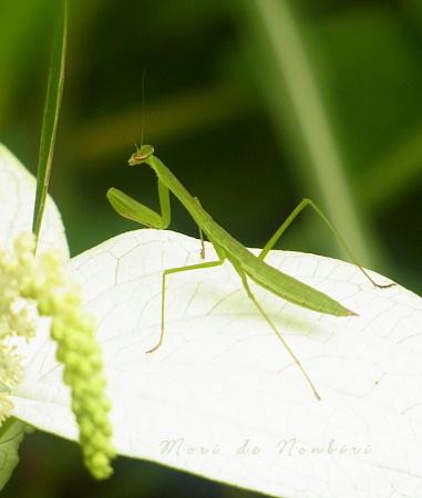 Photos: 祈り22012.07.08赤塚植物園