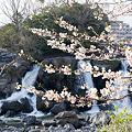 Photos: 鮎壷の滝 2012.4.7-4