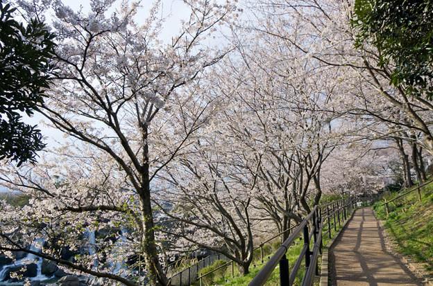 Photos: 鮎壷の滝 2012.4.7-3