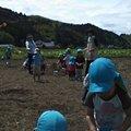 写真: 万江保育園が田んぼで泥遊び中。