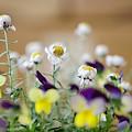 Photos: 屋内は春?!