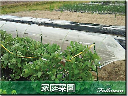 12家庭菜園