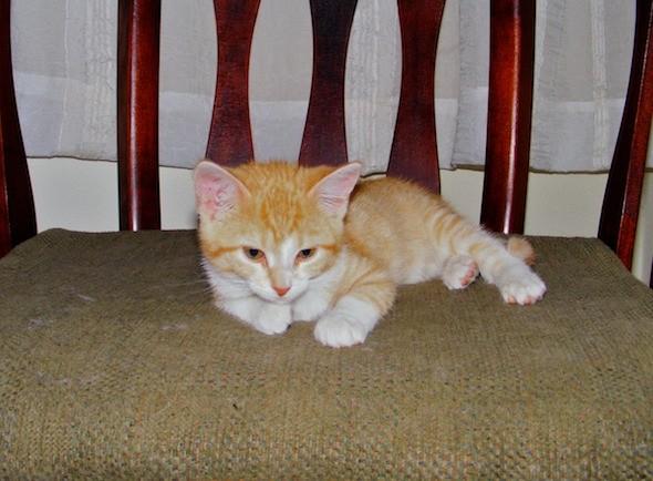 kitten1035_14