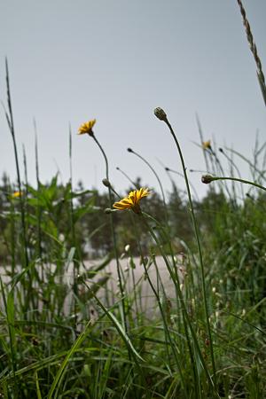Flower05132011dp1-03