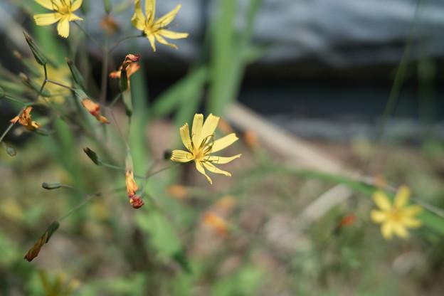 Photos: flower05252011dp2-04