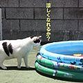 Photos: pool2
