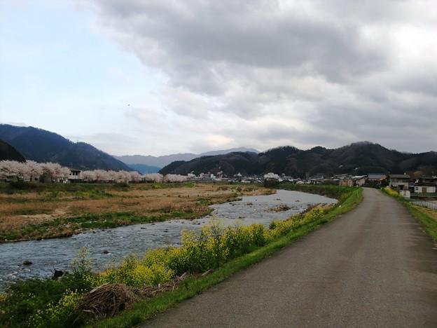 川沿いの桜と菜の花と山並み