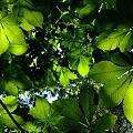 写真: 大きな木の下で(栃)