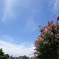 青空散歩1