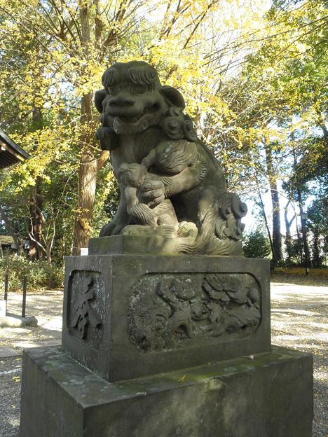 世田谷線:宮の坂駅界隈_世田谷八幡宮-07社殿の狛犬a