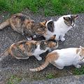 Photos: 猫の大群