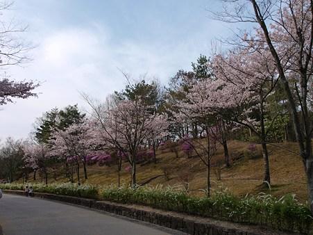 リトルワールドの桜その1