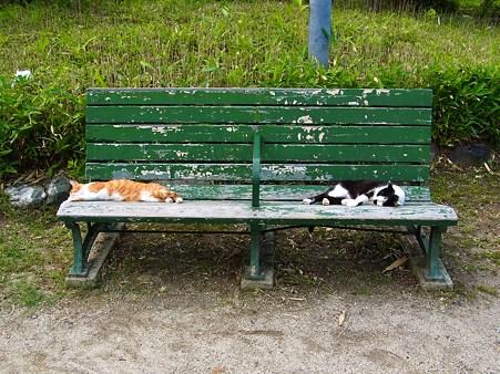 このベンチはおいらたちが占拠した