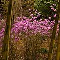 Photos: 竹林に咲く