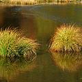 草紅葉 光徳沼