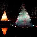 昭和記念公園シャンパングラスツリー