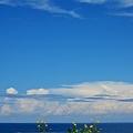 花と雲 01