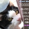 Photos: 20000nice!@so-net Blog