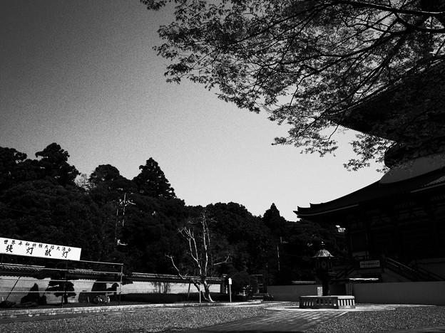国際都市の日本文化