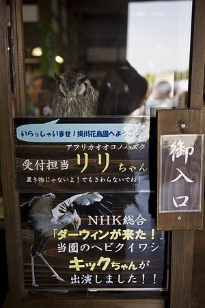 kakegawa110514252