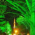 写真: 都会の森