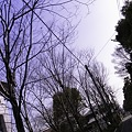 Photos: 2010-03-14の空