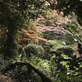Photos: 2010京都植物園秋12