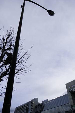 2011-01-16の空