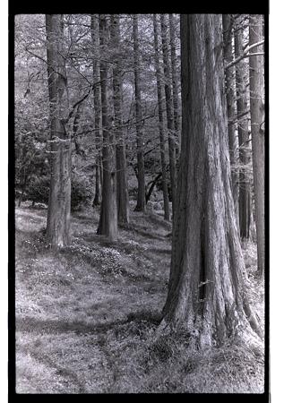 201104-04-005PZ