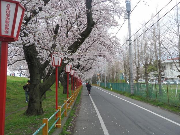 2010_04_07_熊谷桜堤-4