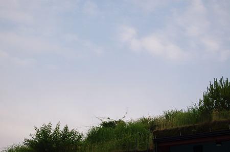 2010年06月07日_DSC_2004