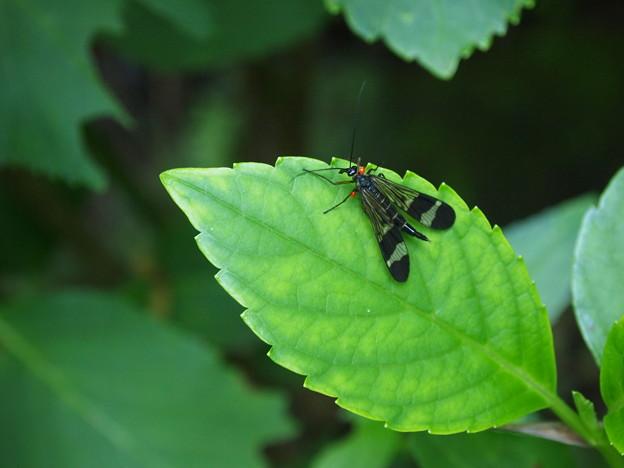 写真: 赤い玉を付けた虫