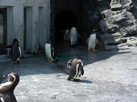 暑さに耐えるペンギンたち