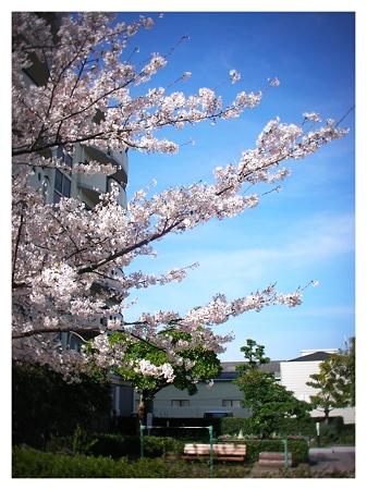 桜2010_03