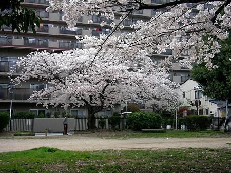 桜2010_06