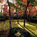 写真: 箱根美術館 紅葉