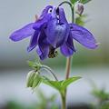 Alpine Blue 5-19-12