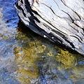 """写真: The Rock and Seaweed ‐ """"Largo"""""""