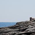 Photos: Salty Dogs 4-3-10