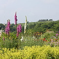 山の上の花畑