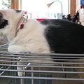 Photos: ケージの上の猫1