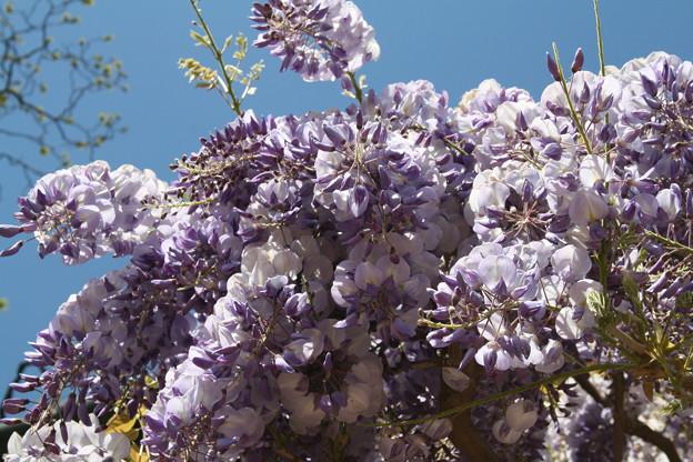 Photos: 2009-04-26-12-42-19_0023