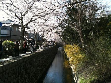 http://art26.photozou.jp/pub/551/296551/photo/35712019.jpg