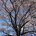Photos: 2010_0410_122635