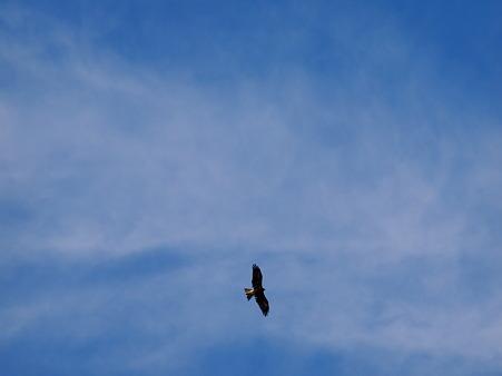 青空に翼を広げて