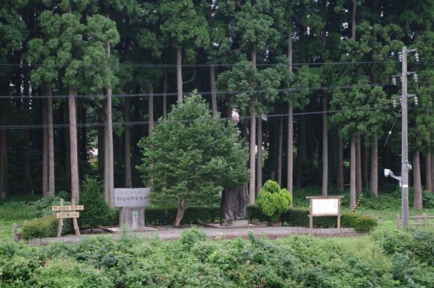 s1860_野辺地駅の鉄道防風林