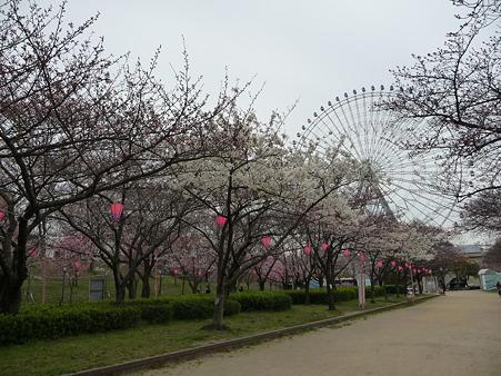100331-天保山公園 (19)