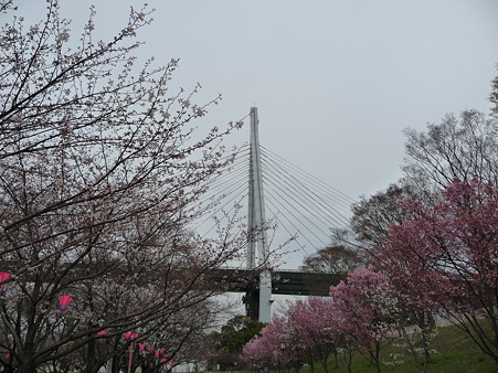 100331-天保山公園 (29)