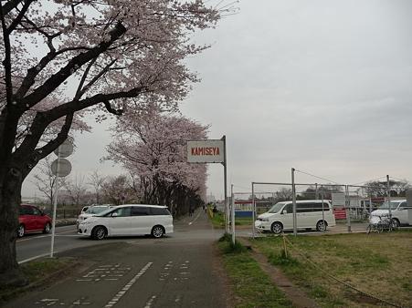 100404-海軍道路の桜 (29)