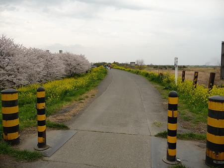 100411-熊谷桜堤 (44)